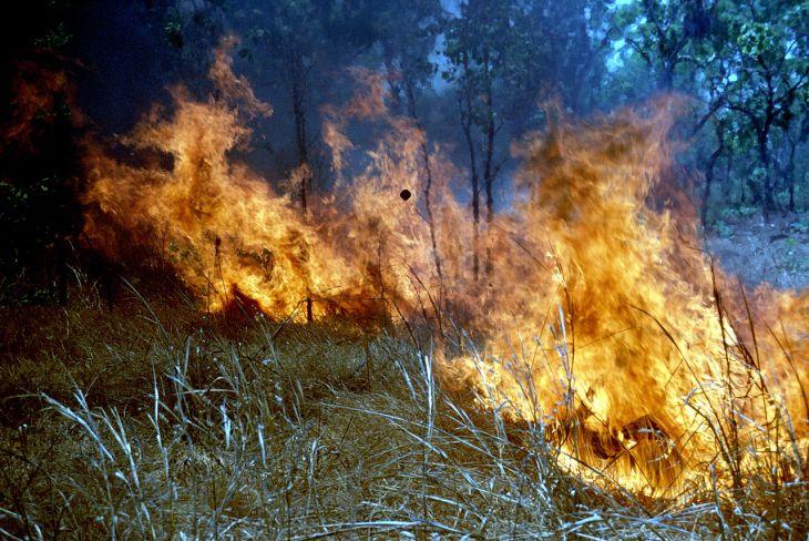 CSIRO_ScienceImage_367_Scrub_Fire