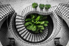 Spiral Staircase w Tree