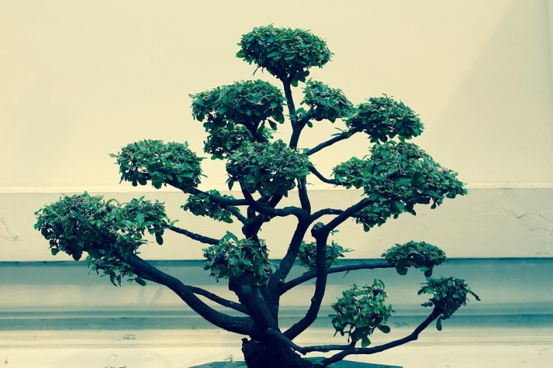bonsai-1179872_960_720