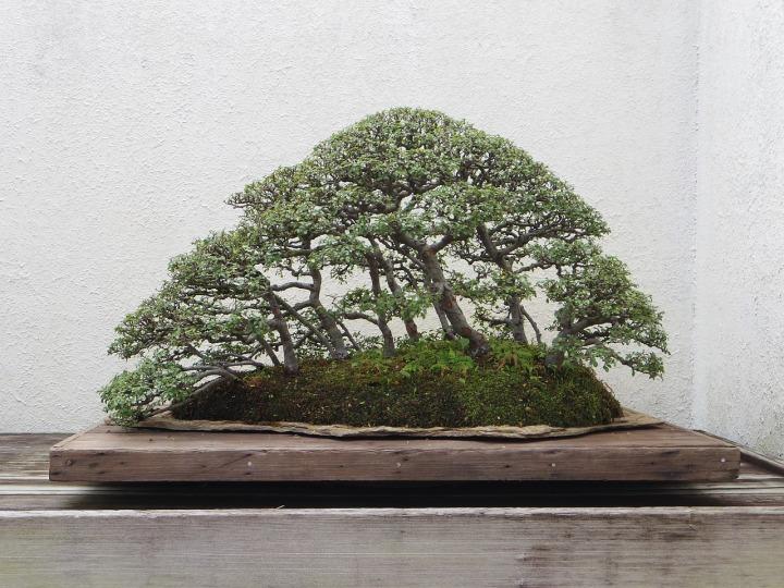 bonsai-2149676_1280